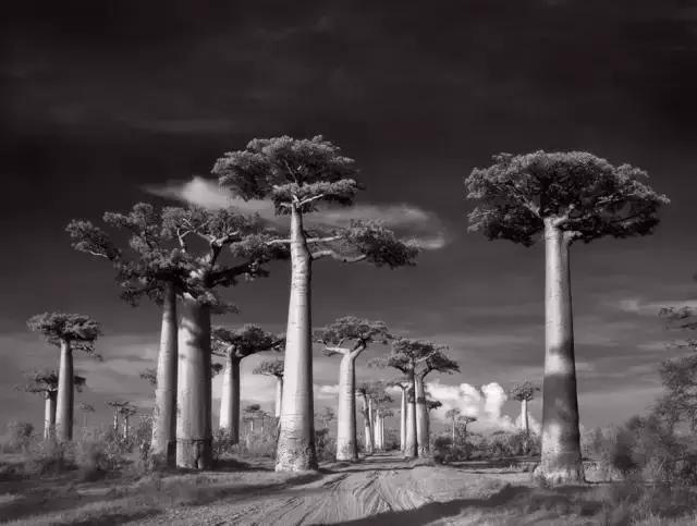 大数据娱乐2-探索世界14年,只为拍下震撼的千年古树