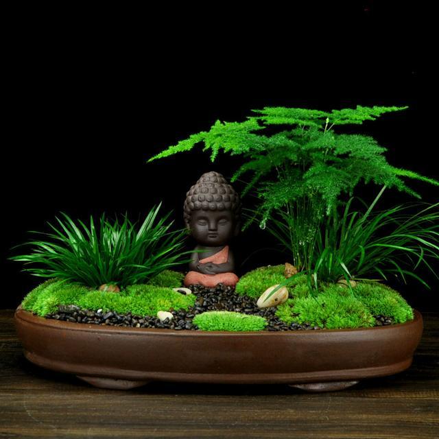 """苔藓微景观绿植盆栽,带你感受静心的禅意""""小世界""""图片"""