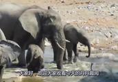 小象不慎跌入泥潭,众人倾尽全力才将其救出,象宝宝:本宝宝不重