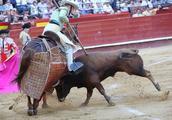 """西班牙斗牛士骑""""盲马""""斗牛被击倒"""
