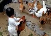 他自己养的鸡病了,不肯吃饭