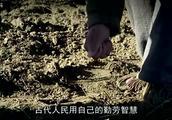 一次严重的技术泄露,中国几只虫子被外国人偷走,造成损失超百亿