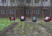 高校开设种田必修课 每个学生农场里修满40个学时才行