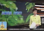 """浙江杭州:吹雪神器""""歼5""""发动机破冰忙"""