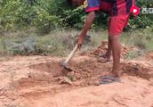 农村简单的抓鸟机关,只需挖个坑,收获满满!