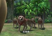 森林里出了大事,黑狼和乌斯要查出凶手,真相究竟是什么?