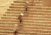 蚂蚁真是天才,竟然建造出了金字塔!蚂蚁的井然有序让人佩服!