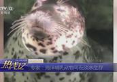 山东济南;趵突泉公园淡水饲养海豹引质疑