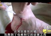 有幼崽的母熊很危险,男子作死去骚扰它们,结果脚被咬出两个血洞