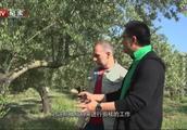 橄榄在西班牙有着特殊的地位,西班牙每一道美食中,它都不可或缺