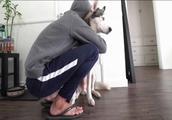 给哈士奇一个深深的拥抱,狗狗是如何回应主人?