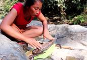 苗条大姐野外徒手抓鱼,用香蕉树焖熟直接就吃,连鱼鳞都没刮