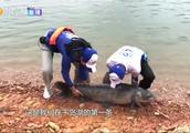 """千岛湖超60斤螺蛳青!成年男子抱起吃力,嘴巴简直是""""巨口""""!"""