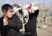 城里人有钱也买不到的草鸡,多少钱一斤?村长也吃不起