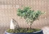 农村老师傅创作的精美组合盆景欣赏,雅致飘逸,素淡飘逸!