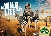 盘点澳洲特有的动物园,感受十二次亲密接触