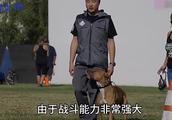 比特犬和猞猁体型相差不多,它俩要是打起架来谁更厉害呢