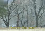 冬季恋歌:相爱的人无处不在,冬日的暖阳,穿过密密的白桦林