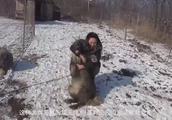 高加索犬被称为犬中之王的原因,看狼对它的态度就知道了