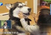 宠物为何成为致命元凶?危害人类健康的致命疾病,可能来自于它们