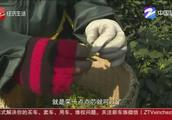 西湖龙井明前茶供不应求,每斤价格在2000元到5000元不等