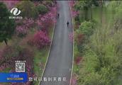 """株洲有座""""桃花岛"""""""