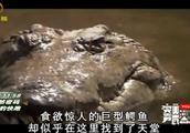 图尔卡纳湖环境恶劣,几乎没有生命活动迹象,但鳄鱼却把这当天堂