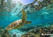 澳大利亚大堡礁白化严重,剩下的日子屈指可数