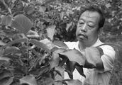 10日凌晨,河北农大李保国教授走了!去世前一天还在工作!