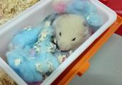 网友养了两只仓鼠,几天后发现少了一只,网友一脸懵逼