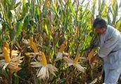 玉米产业链中的结构优化和金融服务升级
