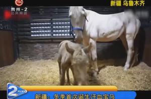 新疆:冬季首次诞生汗血宝马,垫料加厚再给它穿个小马衣