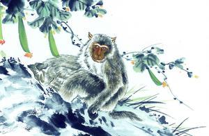 猴子属于什么星座 属猴的人是什么星座