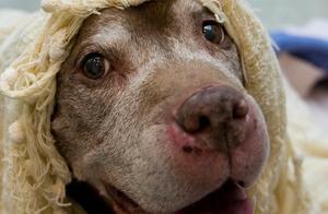 刚失去爱犬又领养18岁老狗回家,暖心大叔:不想让它死在收容所