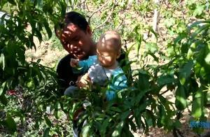 农村宝爸抱着小宝宝在弄啥呢,小宝宝很用力地摘树叶
