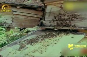 多年的养蜂人称,蜜蜂大规模自相残杀是不可避免的