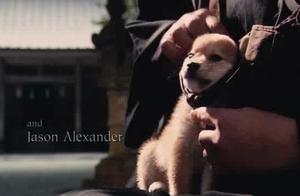 日本的秋田犬来到了美国也这么忠诚还是忍着看完了