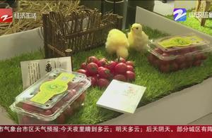 番茄一年能卖5千多万元 普惠金融助力乡村振兴