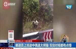 邮递员上班途中偶遇大熊猫,拿起手机跟拍,熊猫:赶紧溜