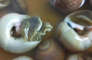 """试吃浙江的""""醉香螺 ,吃在嘴里感觉味道太奇怪,怎么都是生的啊"""