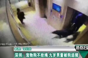 深圳:乘电梯不拴狗绳 9岁男孩遭3只大狗追撵 狗主人全程淡定