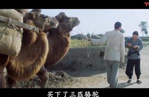 骆驼祥子究竟跟骆驼有什么关系, 这部电影告诉你答案