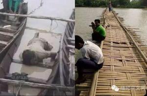 缅甸男子骑摩托车载猪过河,结果不幸的事情发生了。。。