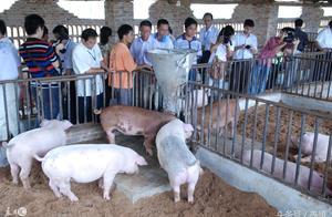 养猪合作社税收政策 对养猪合作社国家有什么补贴政策