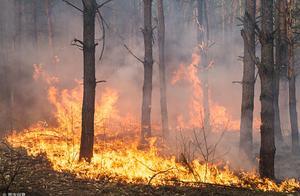 长治沁源县森林火灾致6名消防员牺牲 起火原因已查明 犯罪嫌疑人被刑拘