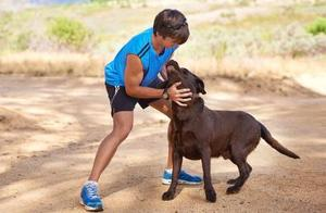 训练拉布拉多犬时,下面的这6种方式不可取,不然后果会很严重!