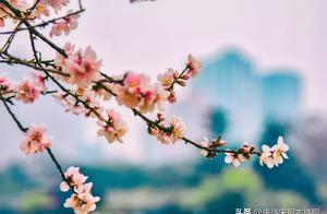 有关扇子的千古名句 桃花的诗句千古名句