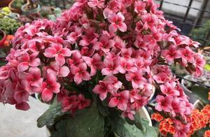 20种花,放阳台长成花球,一朵接一朵不用担心没花赏!