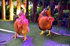卫计委:我国进入H7N9人感染禽流感高发季!这些情况需注意!