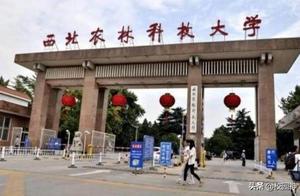 前两名已确定,那么在陕西省高校中哪所大学排在第三名呢?